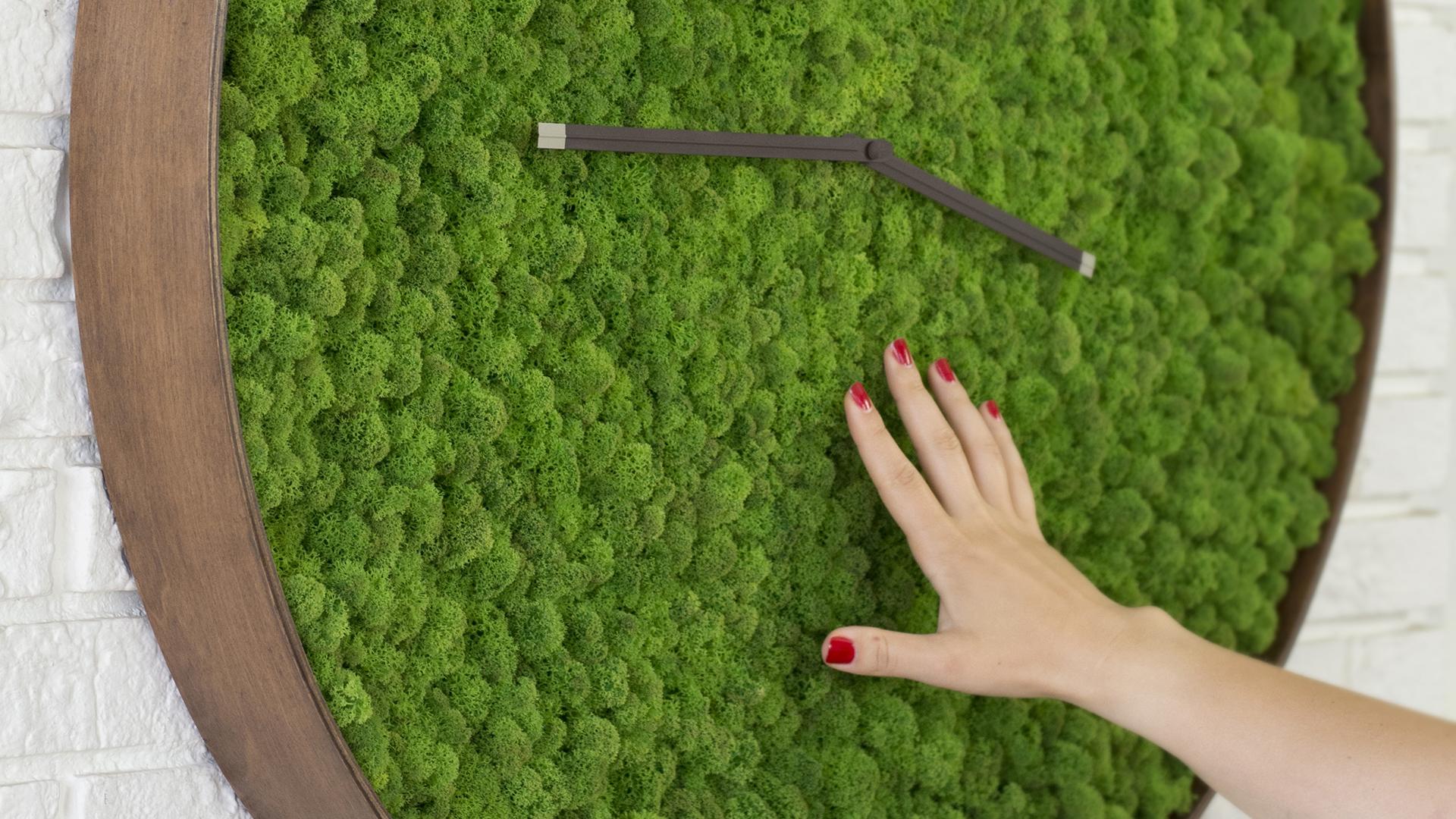 Moss Clock 32 Noktuku